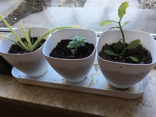 windowplants